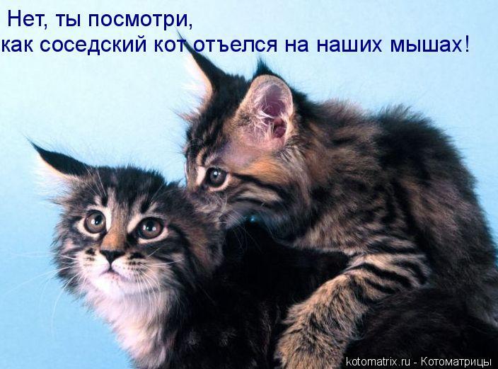 Котоматрица: Нет, ты посмотри,  как соседский кот отъелся на наших мышах!