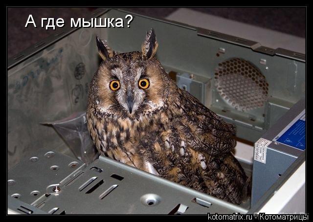 Котоматрица: А где мышка?