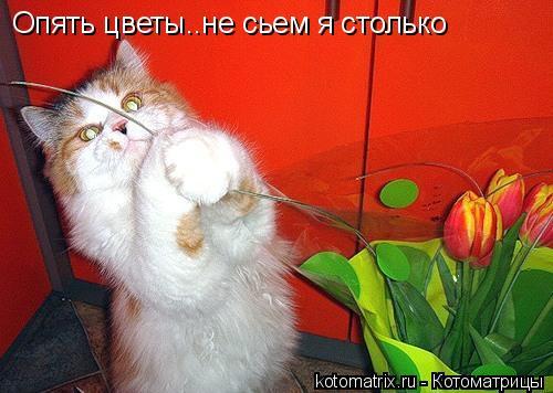 Котоматрица: Опять цветы..не сьем я столько