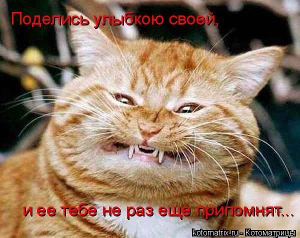 Котоматрица: Поделись улыбкою своей,  и ее тебе не раз еще припомнят...