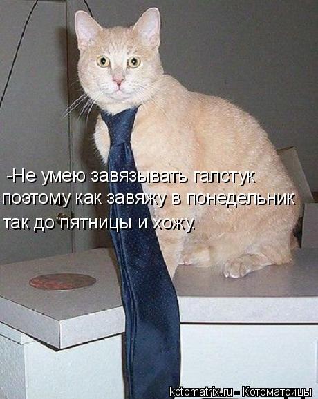 Котоматрица: -Не умею завязывать галстук поэтому как завяжу в понедельник так до пятницы и хожу.