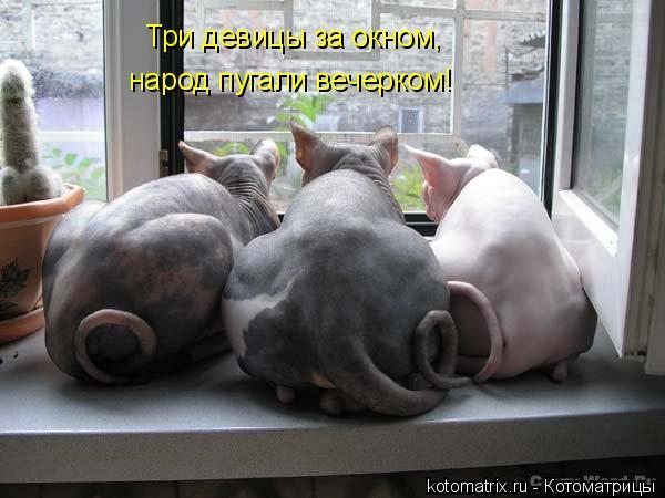 Котоматрица: Три девицы за окном,  народ пугали вечерком!