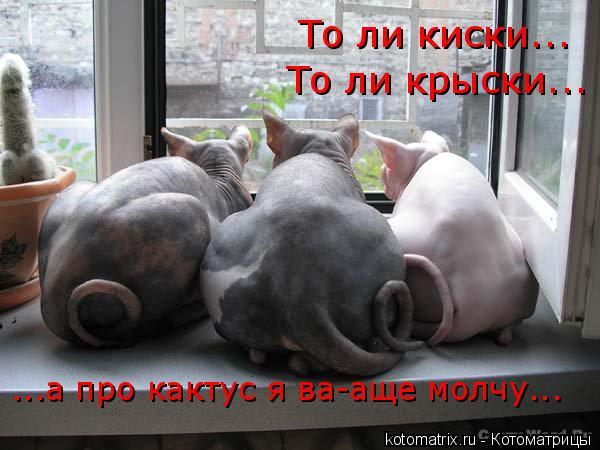 Котоматрица: То ли киски... То ли крыски... ...а про кактус я ва-аще молчу...