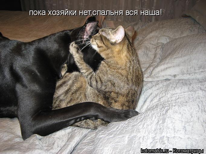 Котоматрица: пока хозяйки нет,спальня вся наша!
