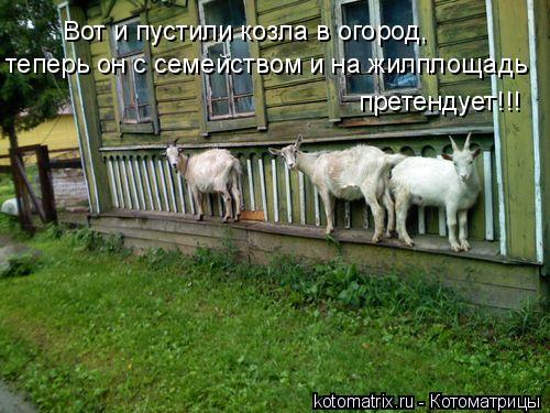 Котоматрица: теперь он с семейством и на жилплощадь Вот и пустили козла в огород, претендует!!!
