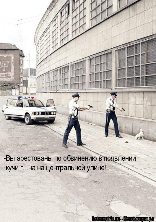 Котоматрица: -Вы арестованы по обвинению в появлении  кучи г...на на центральной улице!