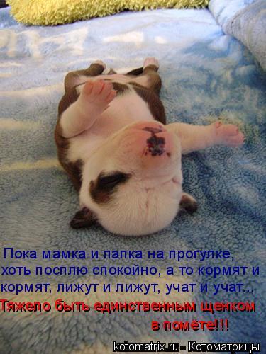 Котоматрица: Пока мамка и папка на прогулке, хоть посплю спокойно, а то кормят и  кормят, лижут и лижут, учат и учат... Тяжело быть единственным щенком в пом