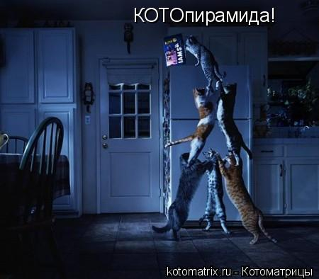 Котоматрица: КОТОпирамида!