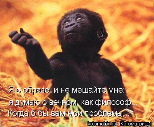 Котоматрица: я думаю о вечном, как философ... Я в образе, и не мешайте мне: Когда б бы вам мои проблемы...