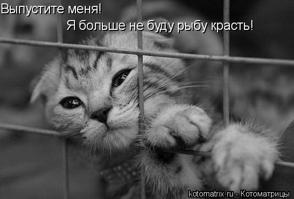 Котоматрица: Выпустите меня! Я больше не буду рыбу красть!