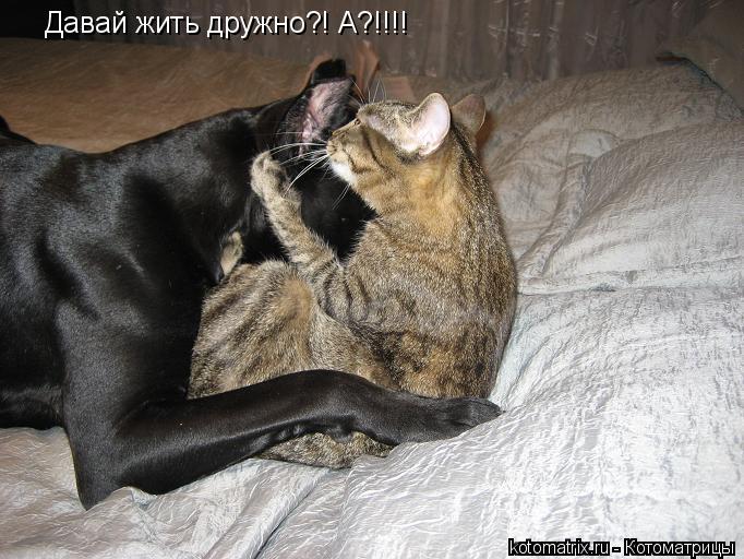 Котоматрица: Давай жить дружно?! А?!!!!