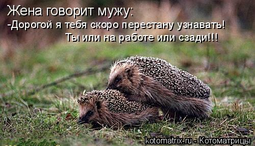 Котоматрица: Жена говорит мужу: -Дорогой я тебя скоро перестану узнавать! Ты или на работе или сзади!!!