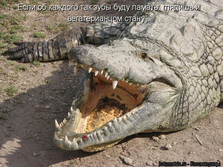 Котоматрица: Если об каждого так зубы буду ламать, глядишь и вегатерианцом стану...
