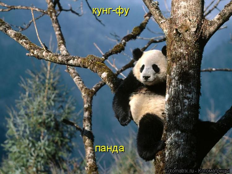 Котоматрица: кунг-фу панда