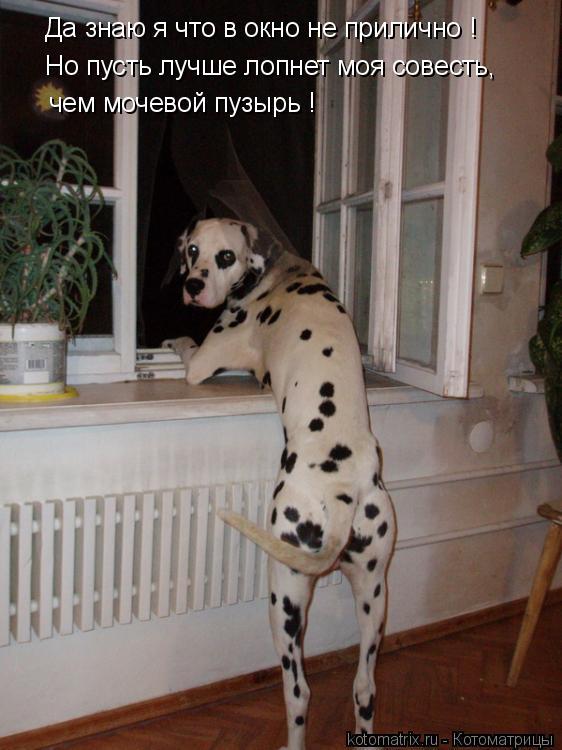 Котоматрица: Да знаю я что в окно не прилично ! Но пусть лучше лопнет моя совесть, чем мочевой пузырь !