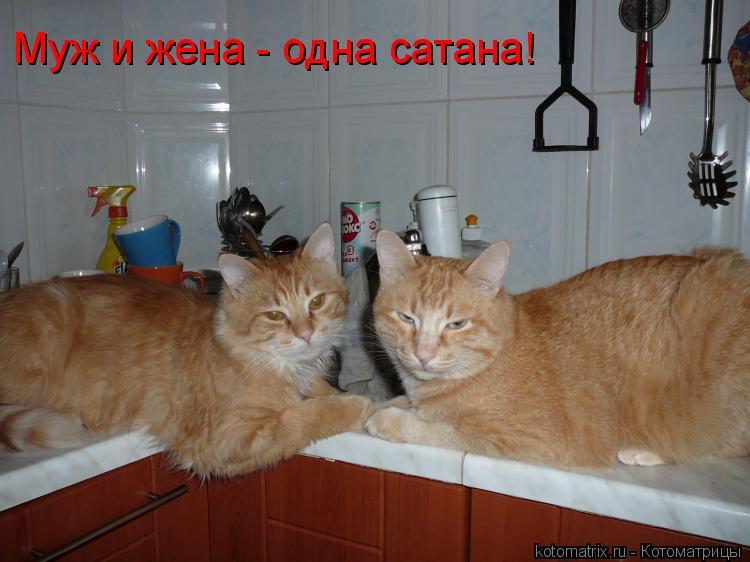 Котоматрица: Муж и жена - одна сатана!