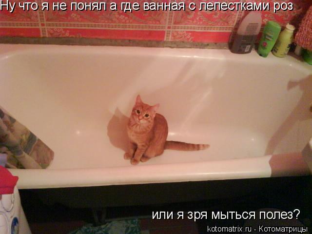 Котоматрица: Ну что я не понял а где ванная с лепестками роз  или я зря мыться полез?