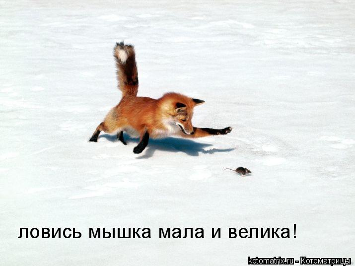 Котоматрица: ловись мышка мала и велика!