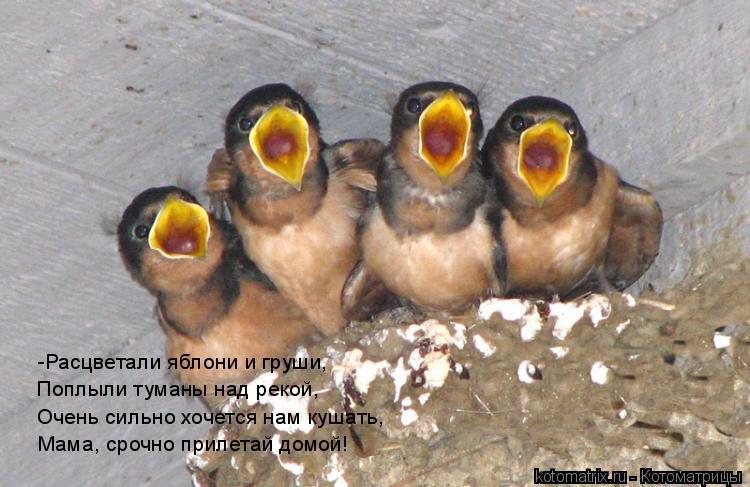 Котоматрица: -Расцветали яблони и груши, Поплыли туманы над рекой, Очень сильно хочется нам кушать, Мама, срочно прилетай домой!