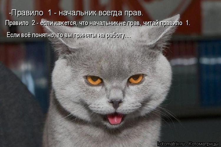 Котоматрица: -Правило №1 - начальник всегда прав. Правило №2 - если кажется, что начальник не прав, читай правило №1. Если всё понятно, то вы приняты на рабо