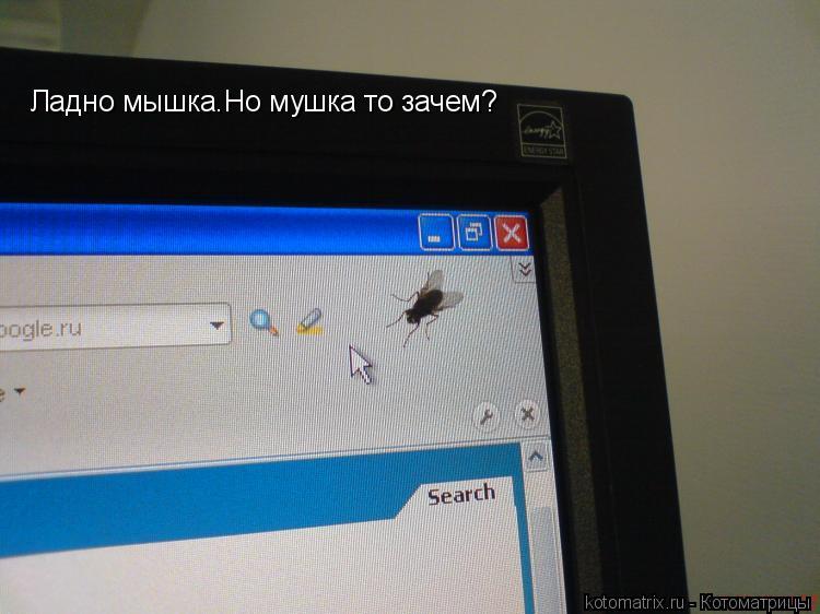 Котоматрица: Ладно мышка.Но мушка то зачем?