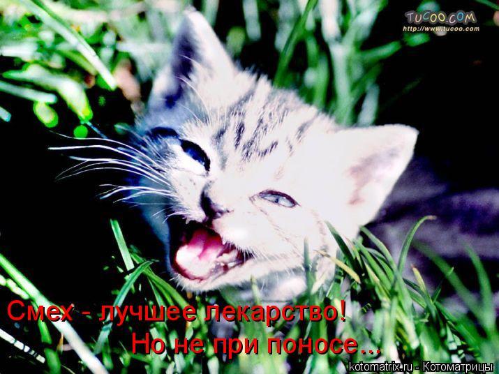 Котоматрица: Смех - лучшее лекарство!  Но не при поносе...