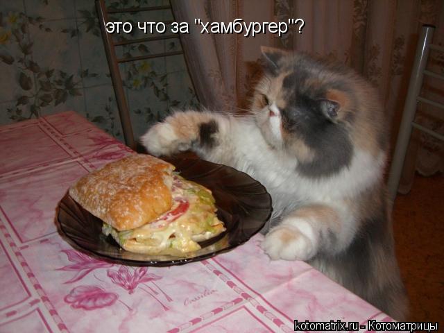 """Котоматрица: это что за """"хамбургер""""?"""