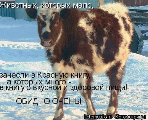 Котоматрица: Животных, которых мало, занесли в Красную книгу, а которых много -  в книгу о вкусной и здоровой пищи! ОБИДНО ОЧЕНЬ!