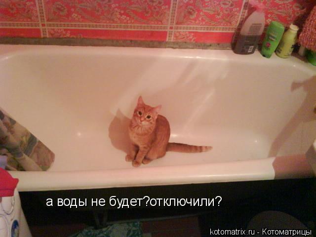 Котоматрица: а воды не будет?отключили?