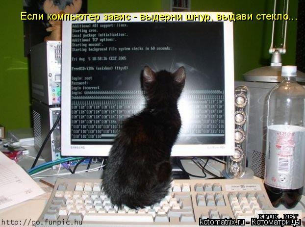 Котоматрица: Если компьютер завис - выдерни шнур, выдави стекло...