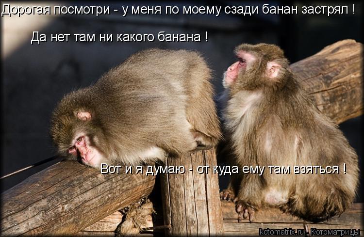Котоматрица: Да нет там ни какого банана ! Дорогая посмотри - у меня по моему сзади банан застрял ! Вот и я думаю - от куда ему там взяться !