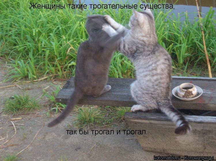 Котоматрица: Женщины такие трогательные существа, так бы трогал и трогал...