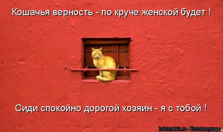 Котоматрица: Кошачья верность - по круче женской будет ! Сиди спокойно дорогой хозяин - я с тобой !