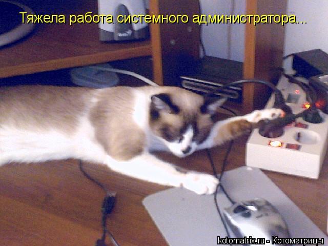 Котоматрица: Тяжела работа системного администратора...