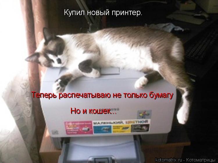 Котоматрица: Купил новый принтер. Теперь распечатываю не только бумагу Но и кошек...