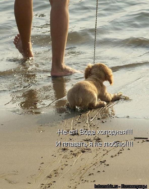 Котоматрица: -Не-ет! Вода холодная!!! И плавать я не люблю!!!!