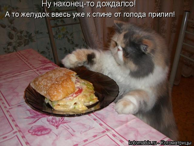 Котоматрица: Ну наконец-то дождалсо! А то желудок ввесь уже к спине от голода прилип!