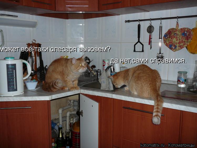 Котоматрица: да нет,сами справимся. может всё-таки слесаря вызовем?