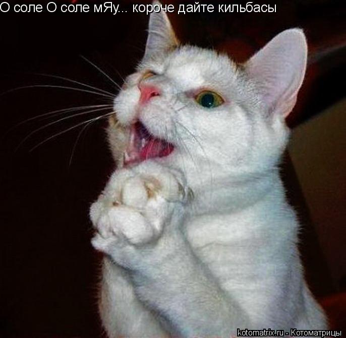 Котоматрица: О соле О соле мЯу... короче дайте кильбасы