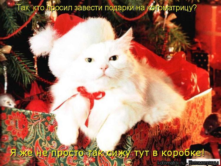 Котоматрица: Так, кто просил завести подарки на котоматрицу? Я же не просто так сижу тут в коробке!