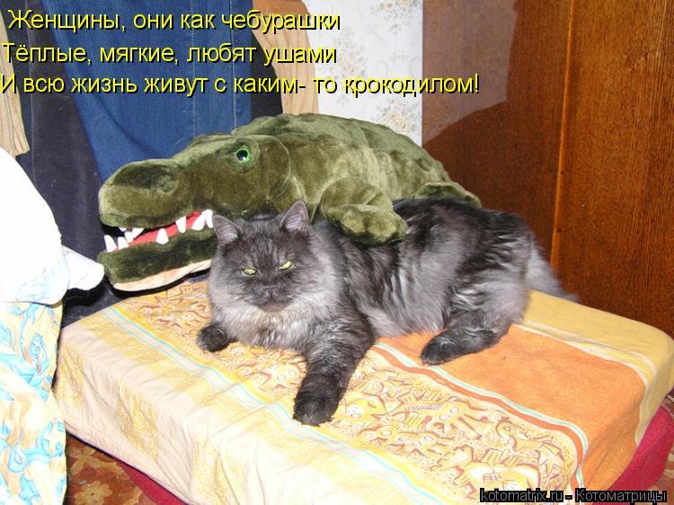 Котоматрица: Женщины, они как чебурашки Тёплые, мягкие, любят ушами И всю жизнь живут с каким- то крокодилом!