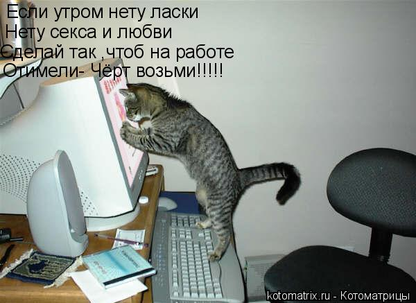 Котоматрица: Если утром нету ласки Нету секса и любви Сделай так ,чтоб на работе Отимели- Чёрт возьми!!!!!
