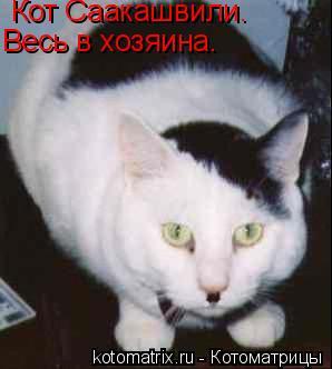 Котоматрица: Кот Саакашвили. Весь в хозяина.