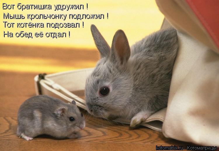 Котоматрица: Вот братишка удружил ! Мышь крольчонку подложил ! Тот котёнка подозвал ! На обед её отдал !