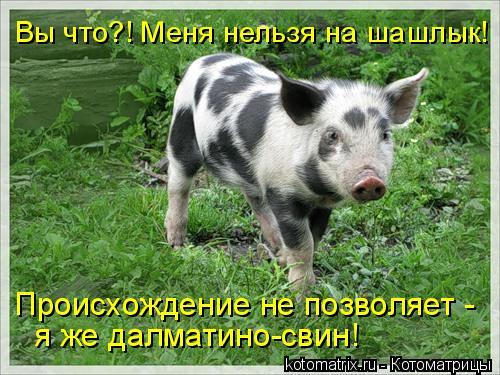 Котоматрица: Вы что?! Меня нельзя на шашлык! Происхождение не позволяет - я же далматино-свин!