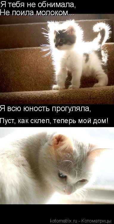 Котоматрица: Я тебя не обнимала,  Не поила молоком... Я всю юность прогуляла, Пуст, как склеп, теперь мой дом!