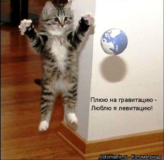 Котоматрица: Плюю на гравитацию -  Люблю я левитацию!