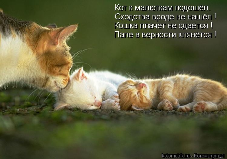Котоматрица: Кот к малюткам подошёл. Сходства вроде не нашёл ! Кошка плачет не сдаётся ! Папе в верности клянётся !