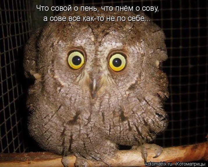 Котоматрица: Что совой о пень, что пнём о сову, а сове всё как-то не по себе...