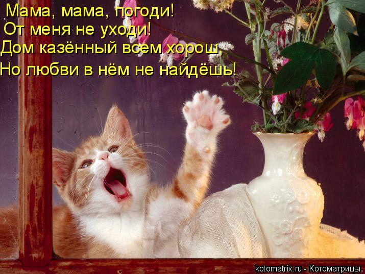 Котоматрица: Мама, мама, погоди! От меня не уходи! Дом казённый всем хорош, Но любви в нём не найдёшь!